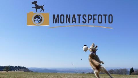 Monatspfoto Ups