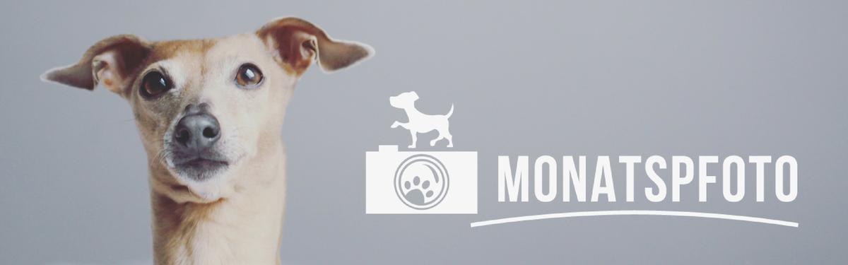 Monatspfoto miDoggy Blog Community für Hunde