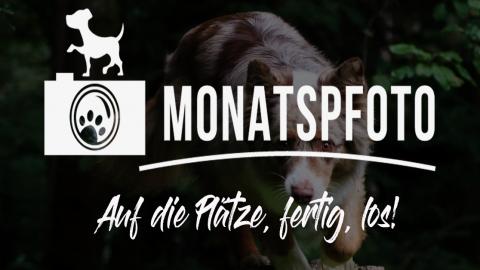 Montaspfoto August