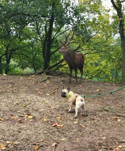 Murphy's Familienausflug zu den Wölfen