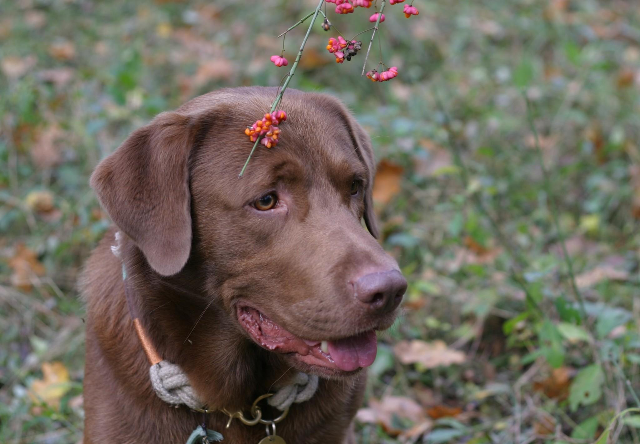 Frühlingsgefühle beim Hund