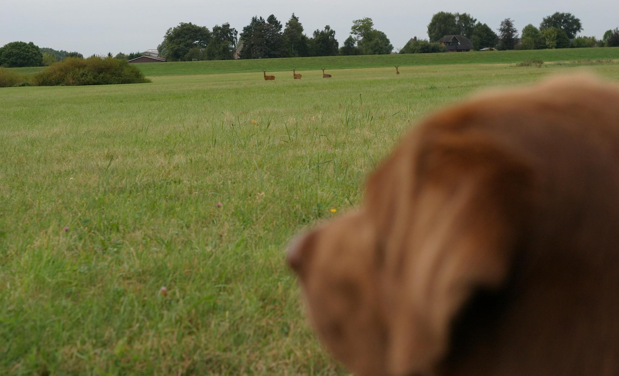 Hund und Jagdverhalten verhindern