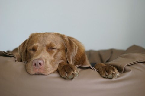 Kuscheln mit Kensons: Hundebett zu gewinnen!