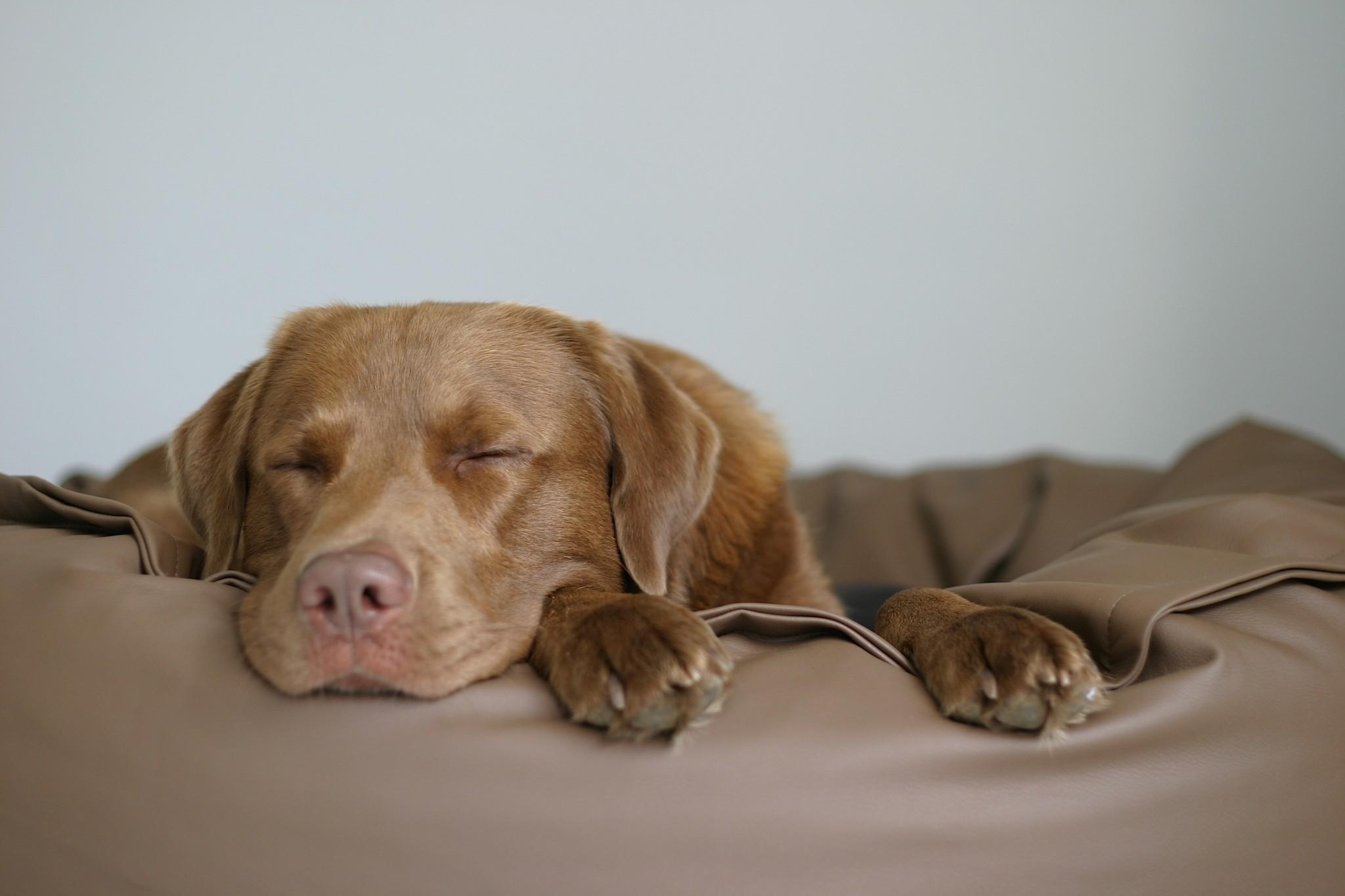 Hundebett Kensons Erfahrungen