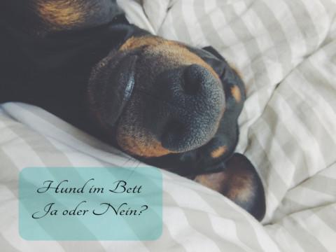 "Hunde im Bett: ""Ja oder Nein?"" [miDoggy Parade]"