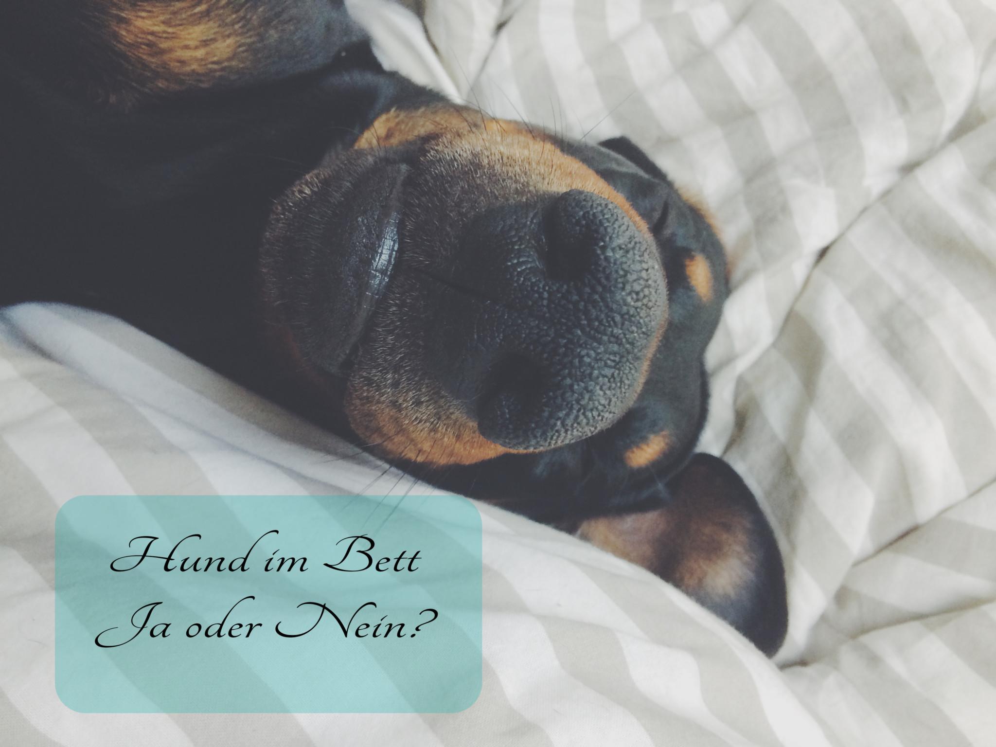 Sollte mein Hund im Bett schlafen?