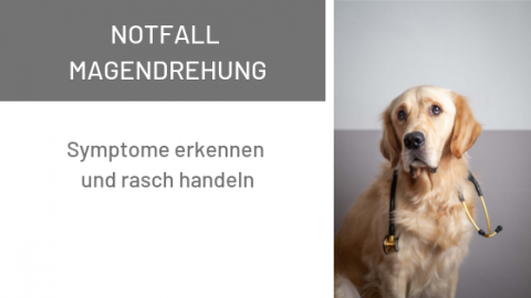 Notfall Magendrehung beim Hund