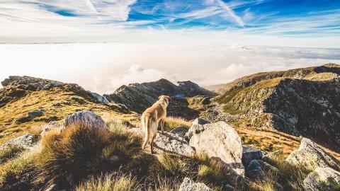 10 Tipps, wie du ein nachhaltigeres Leben mit deinem Hund führen kannst