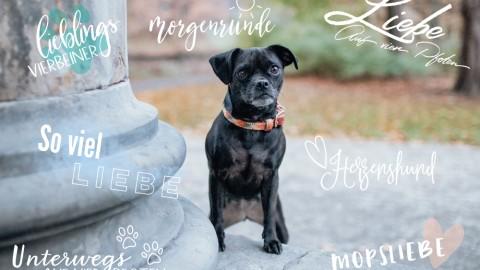 Instagram: Story-Sticker für Hundebesitzer