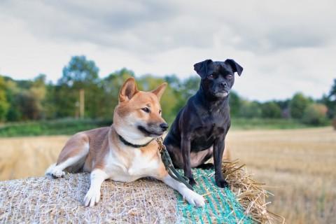 Leben mit zwei Hunden – Warum nehmt ihr denn nicht beide mit?
