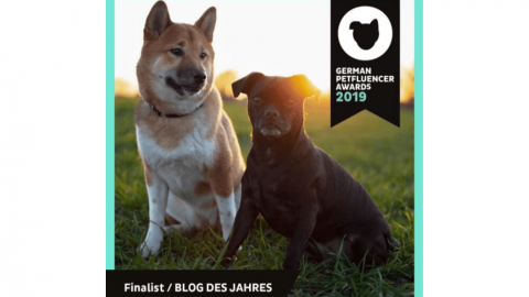 German Petfluencer Award 2019