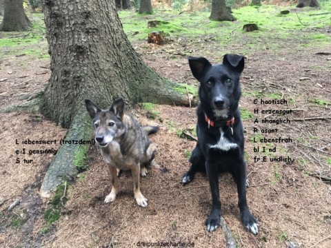 Blogparade Hundenamen