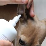 Natürliche Ohrenpflege Aniforte miDoggy 5613