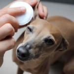 Natürliche Ohrenpflege Aniforte miDoggy 5618