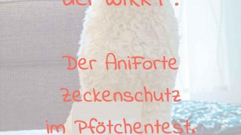 Zeckenmittel für Hunde im Pfötchentest: Wie du deinen Hund natürlich gegen Zecken schützen kannst