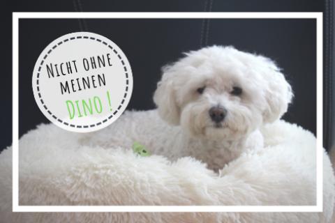 Nicht ohne meinen Dino!