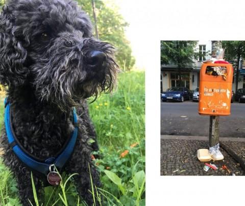 Kein Plastik: Ideen für den Hundealltag