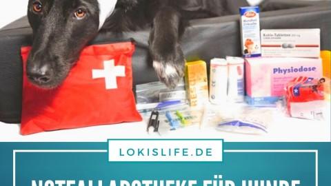 Hausapotheke für Hunde: Diese Dinge gehören für den Notfall hinein