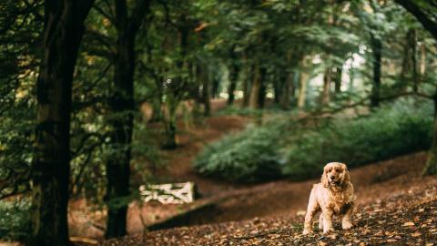 Der ökologische Pfotenabdruck von Hunden