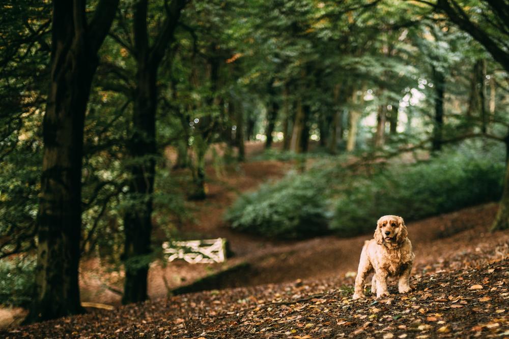 Oekologischer Pfotenabdruck Hund