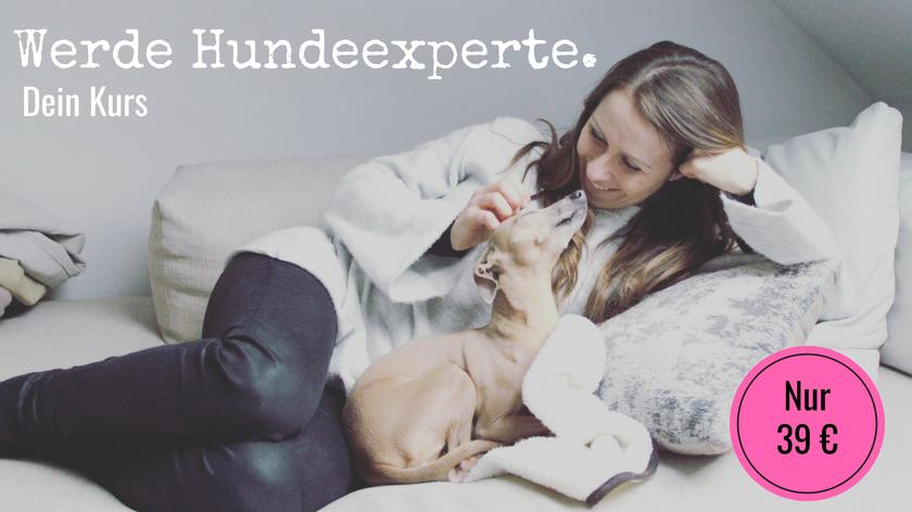 Onlinekurs Hunde Experte