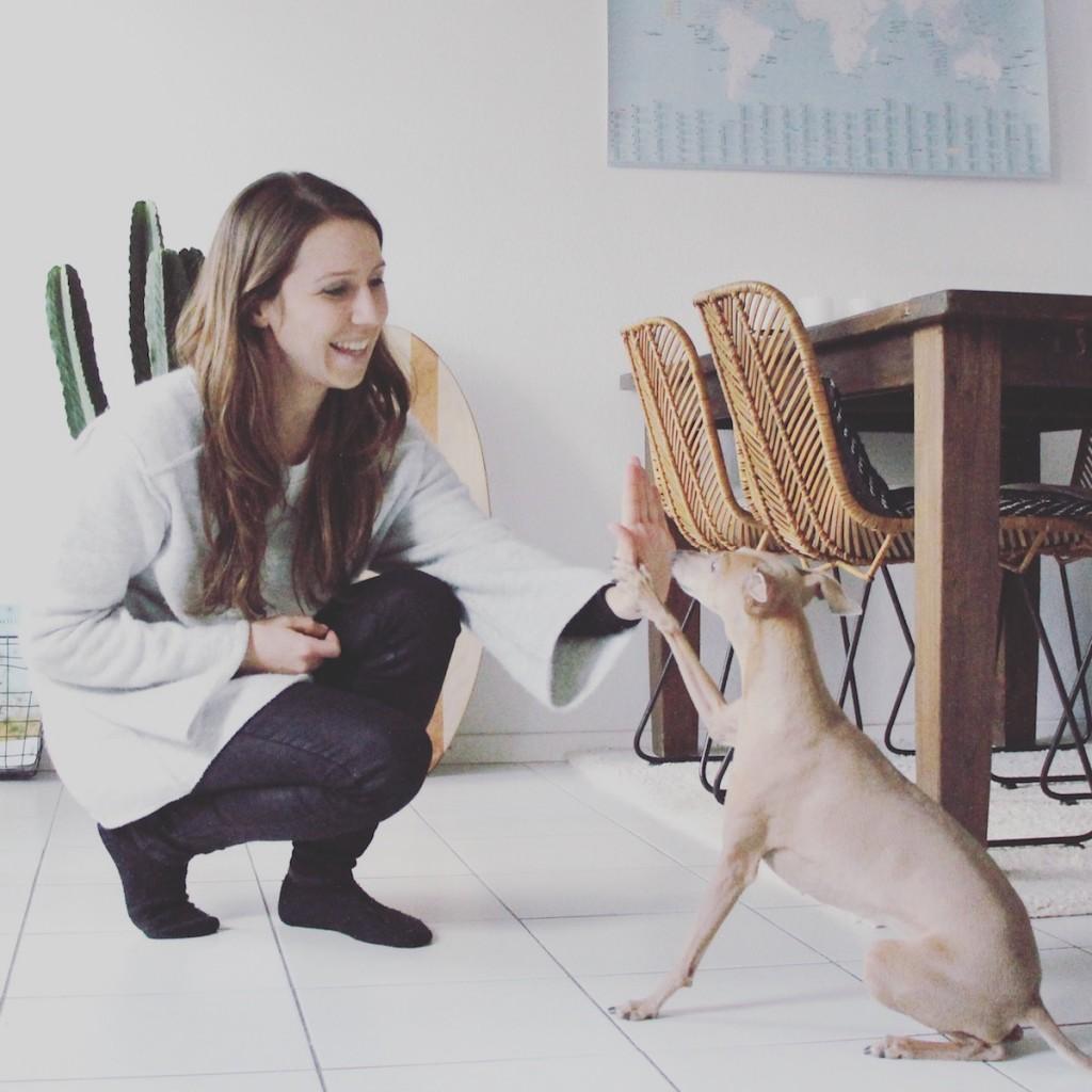 Onlinekurs Hundehalter