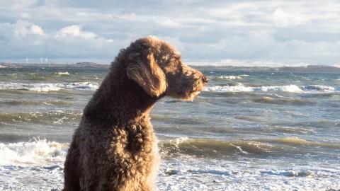 November-Date mit der Ostsee [Reisetipp mit Hund]