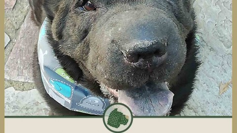 Hundeleben in D: Leopold, der Piraten-Shar Pei
