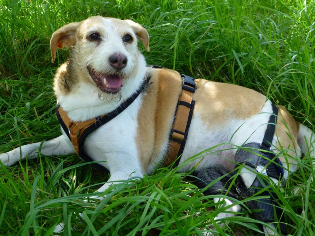 Erfahrungen Hund mit Handicap