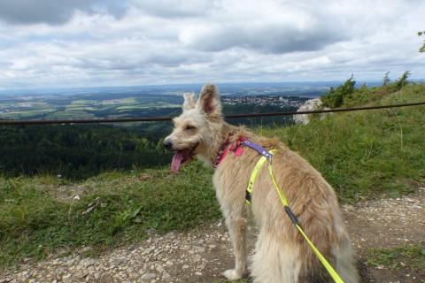 miDoggy Parade: Gassigehen – So findet dein Hund es wieder spannend