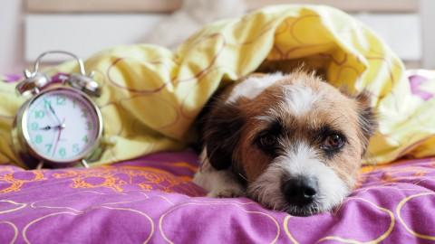 Verfügt mein Hund über eine innere Uhr?