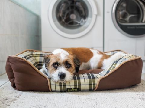 Warum flüchten Hunde ins Bad, wenn ein Gewitter im Anmarsch ist?
