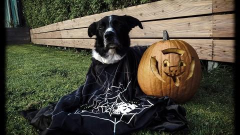 Halloween – im Zeichen des Hunde-Kürbis