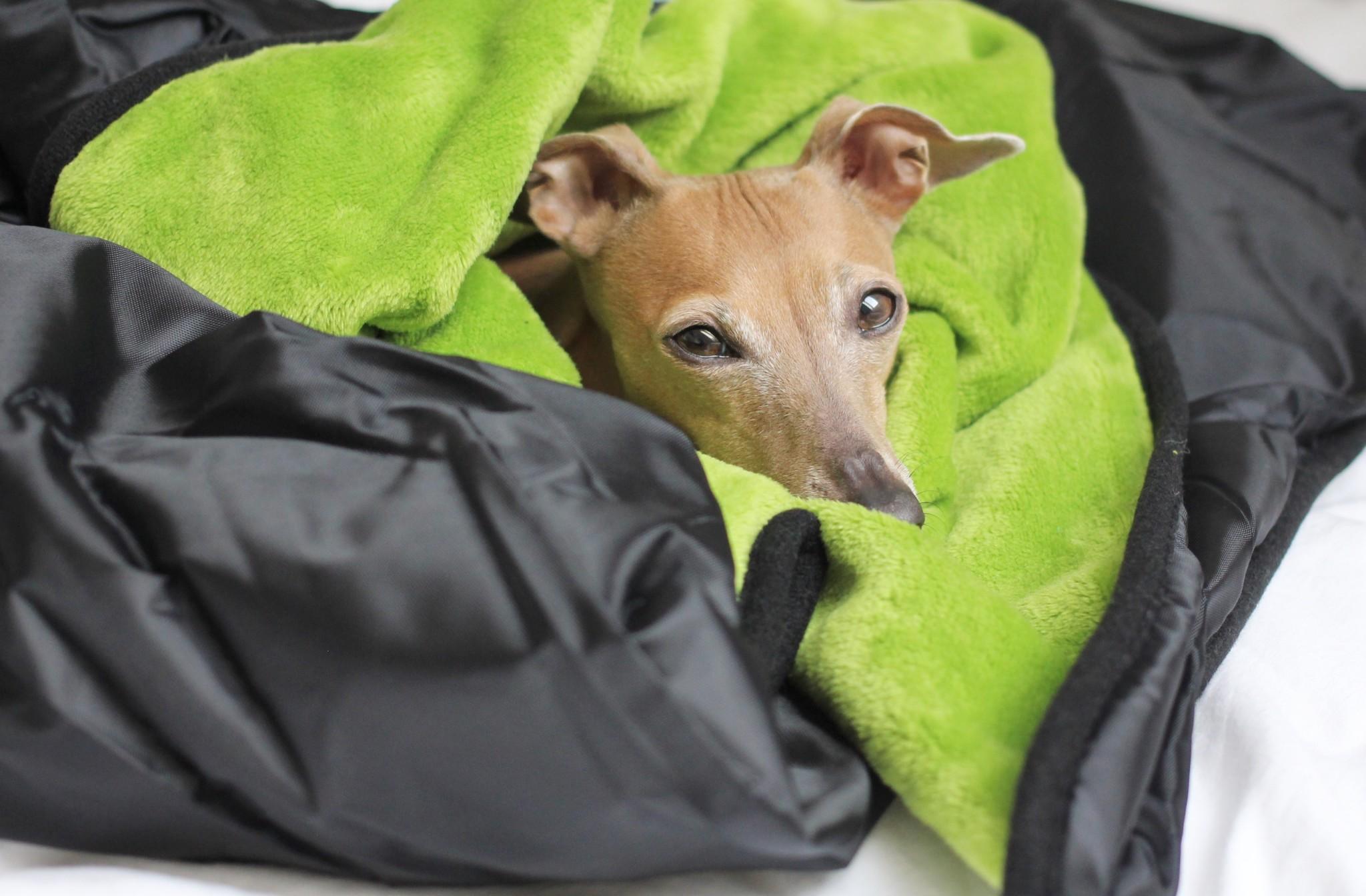 Packliste für eine Wanderung mit Hund