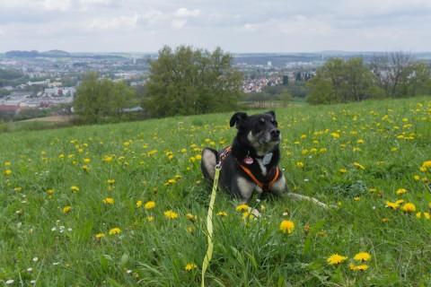 Panoramaweg Aalen: 30 Kilometer wandern mit Hund