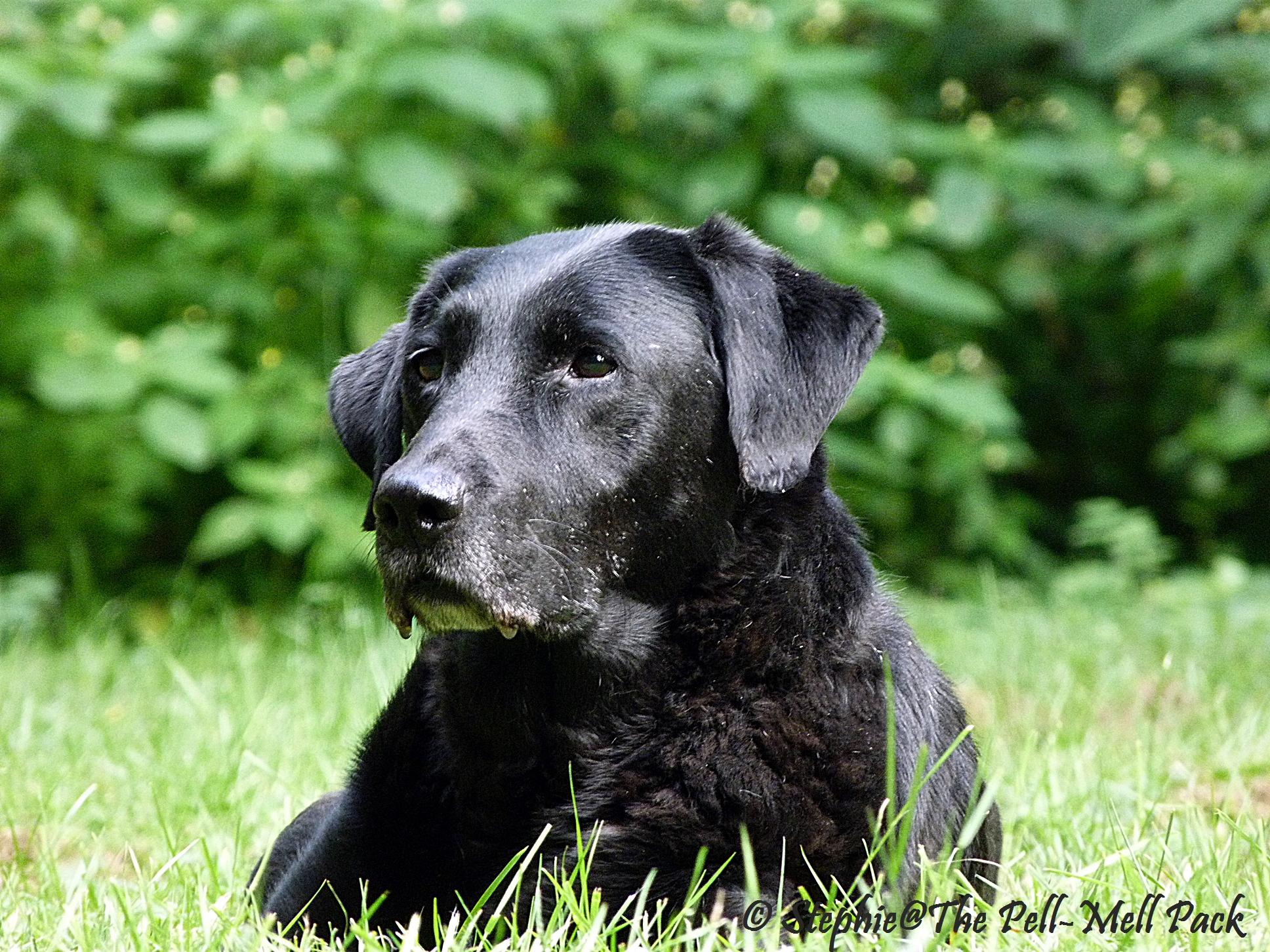 Hund in Würde alt werden