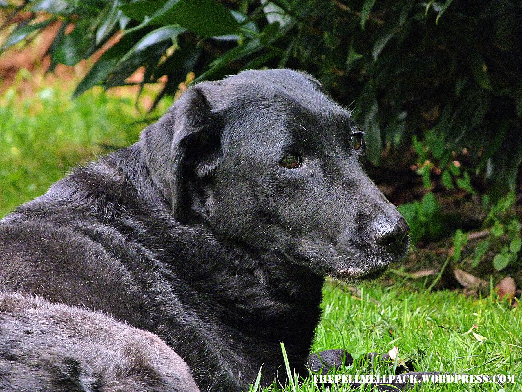 Hundeleben mit Arthrose