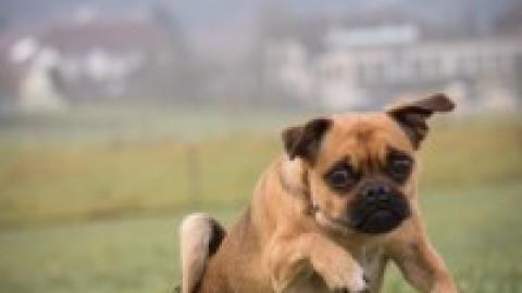 So peinlich kan ein Hundeleben sein