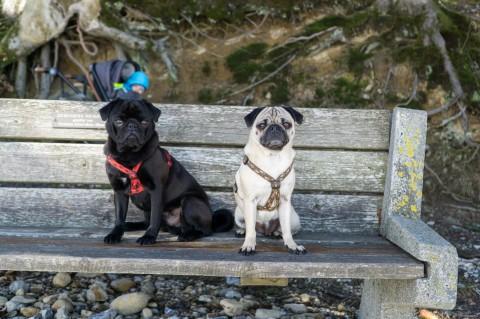 Wandern mit Kleinkind und Möpsen – Höhenweg am Pfänder, Vorarlberg