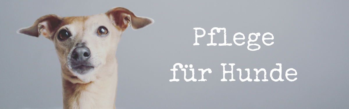 Pflege für Hunde miDoggy Blog Community Krallenpflege Ohrenpflege Zahnpflege Zahnpflege
