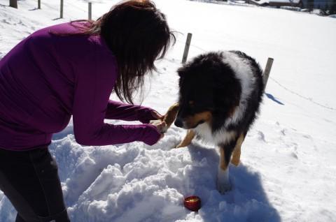 Natürliche Pfotensalbe für Hunde einfach selber machen