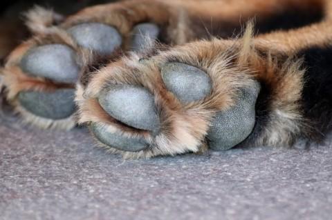 Pfotenschleifen beim Hund – warum es keine Bequemlichkeit ist