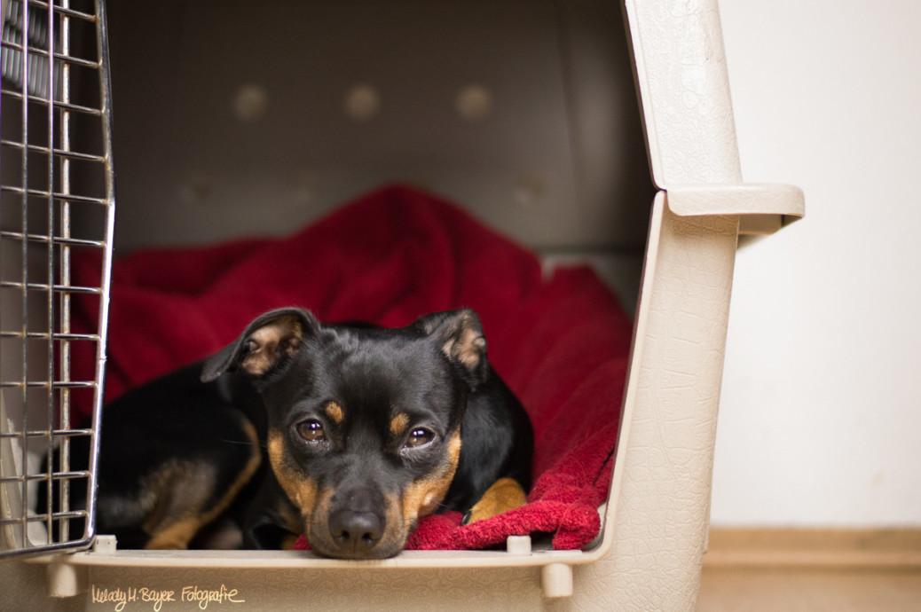 Boxentraining Hund Erfahrungen
