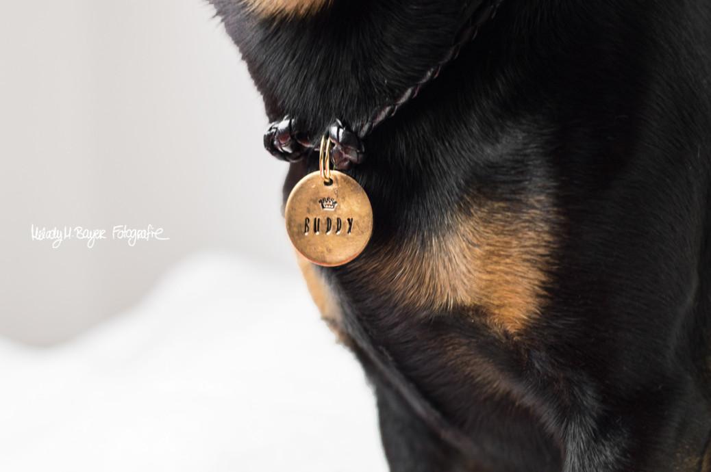 DIY Band für die Hundemarke