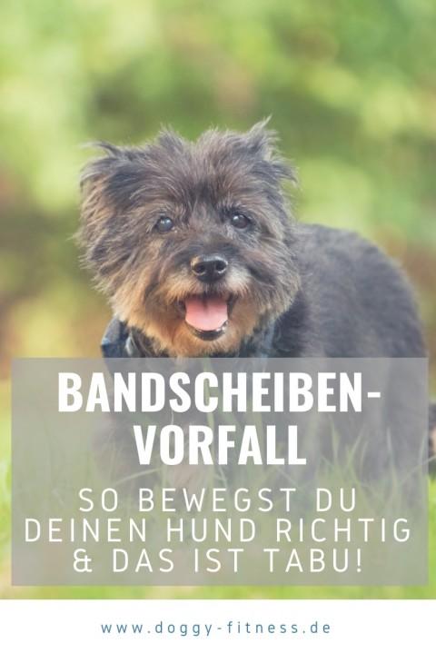 So bewegst du deinen Hund nach einem Bandscheibenvorfall richtig!