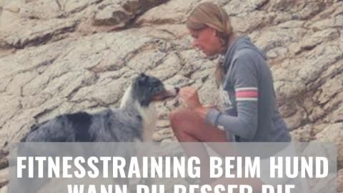 Fitnesstraining beim Hund – warum Balancepads & Co. nicht zum Spaß eingesetzt werden sollten