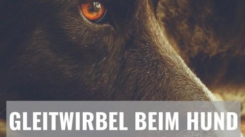 Gleitwirbel beim Hund – die Spondylosisthesis – alle Fakten zur Erkrankung