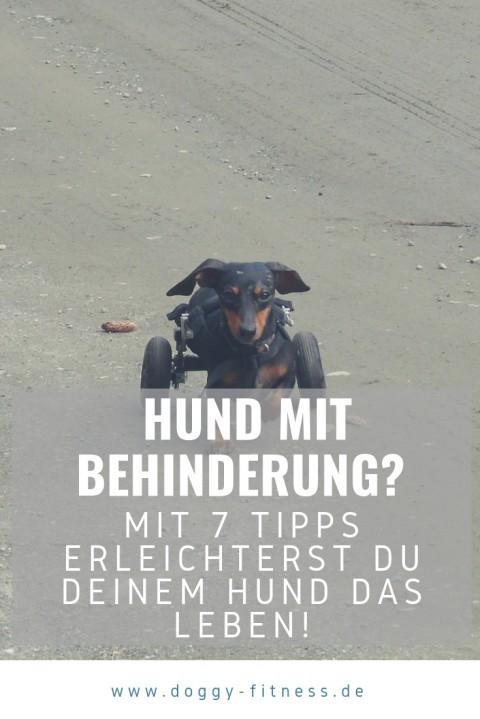 7 Tipps, mit denen du einem Hund mit Behinderung das Leben erleichterst!