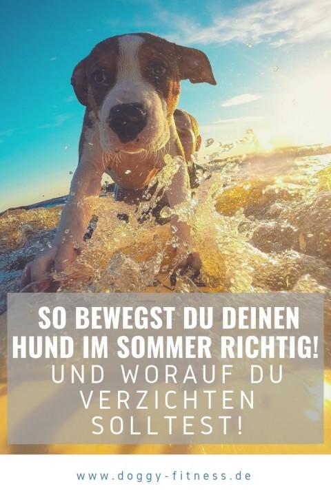Diese Punkte gibt es bei hohen Temperaturen im Sommer bei der Bewegung deines Hund zu beachten – ohne wenn und aber!