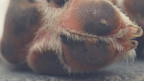 MSM, Glucosamin & Chondroitin – 3 Nahrungsergänzungsmittel, die deinem Hund bei Gelenkproblemen helfen